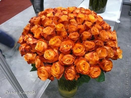Здесь будут, в основном,  розы фото 9