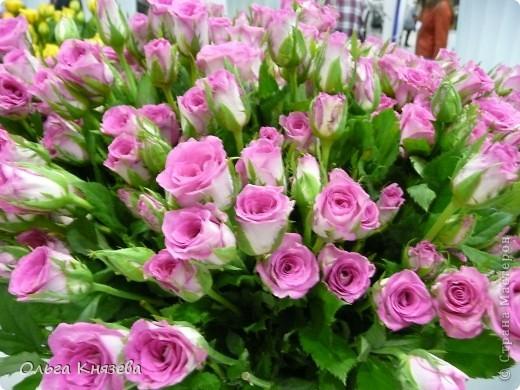 Здесь будут, в основном,  розы фото 10