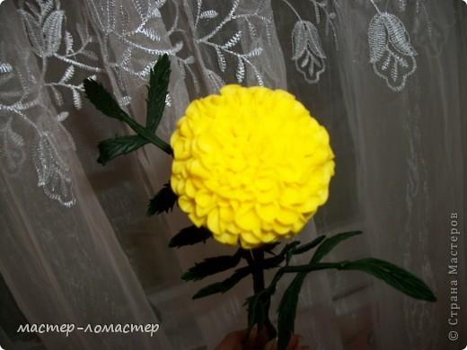 Здравствуйте всем! Это мой первый цветок,поэтому прошу строго не судить.  фото 2