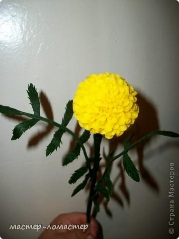 Здравствуйте всем! Это мой первый цветок,поэтому прошу строго не судить.  фото 3