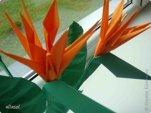 Продолжаю подготовку к выставке цветов оригами. Розы Кавасаки я уже делаю не в первый раз.  http://stranamasterov.ru/node/198800  фото 10