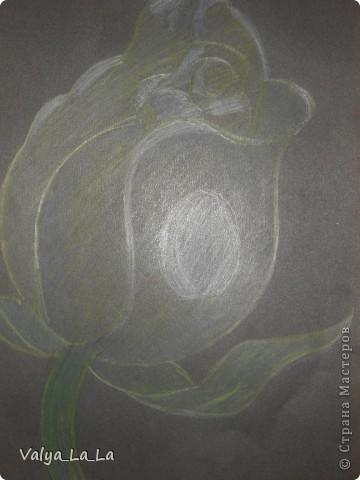 Розочка на черном картоне,карандаши. фото 1