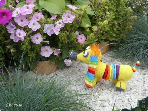 Любопытная Радужка вышла погулять по саду фото 1