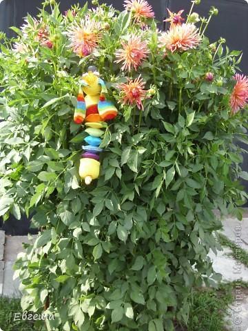Любопытная Радужка вышла погулять по саду фото 3
