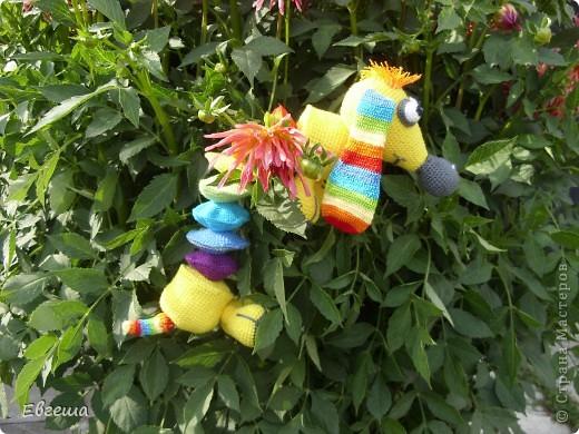 Любопытная Радужка вышла погулять по саду фото 4