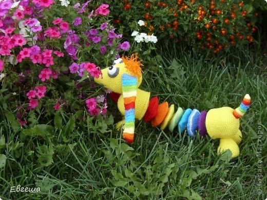 Любопытная Радужка вышла погулять по саду фото 5