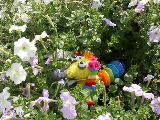 Любопытная Радужка вышла погулять по саду фото 7
