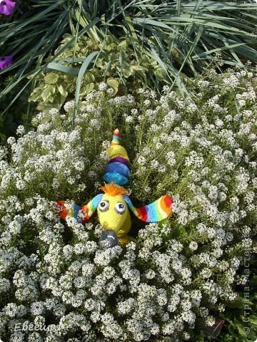 Любопытная Радужка вышла погулять по саду фото 9
