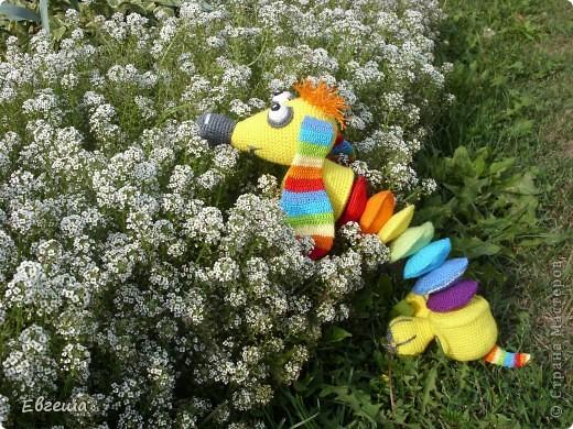 Любопытная Радужка вышла погулять по саду фото 8