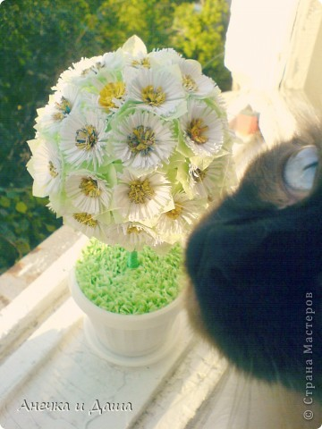 """Здравствуйте! Вот и подходит к концу такое долгожданное лето и уже напоминает о своём существовании холодная осень...бррр. А мы не унываем , у нас снова весеннее настроение! :) В этой записи мы покажем вам немного цветочных деревьев. Это , например, наша """"малютка"""" :) фото 5"""