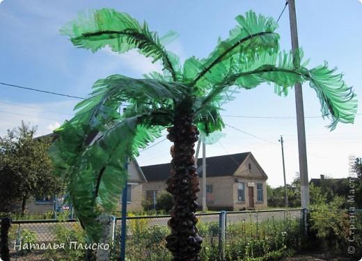 Пальма из бутылок пластмассовых