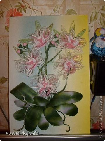 Доброго времени суток, дорогие мастерицы. Сегодня я к вам с орхидеями фото 2