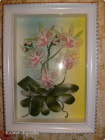 Доброго времени суток, дорогие мастерицы. Сегодня я к вам с орхидеями фото 1