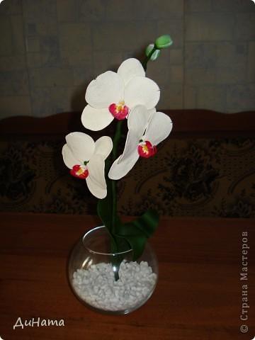 белая орхидея фото 1