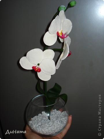 белая орхидея фото 2