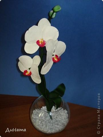 белая орхидея фото 3