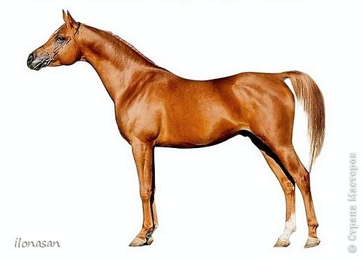 Лошадь из шерсти Сложность работы: выше средней Время работы: 15-20 дней Здравствуйте, Дорогой любитель лошадей и творчества! Предлагаю сделать своими руками скульптурную лошадь из шерсти. Общая высота Златы 23 см, высота в холке 17 см, длина 25 см. фото 7
