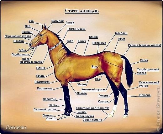 Лошадь из шерсти Сложность работы: выше средней Время работы: 15-20 дней Здравствуйте, Дорогой любитель лошадей и творчества! Предлагаю сделать своими руками скульптурную лошадь из шерсти. Общая высота Златы 23 см, высота в холке 17 см, длина 25 см. фото 11
