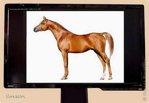 Лошадь из шерсти Сложность работы: выше средней Время работы: 15-20 дней Здравствуйте, Дорогой любитель лошадей и творчества! Предлагаю сделать своими руками скульптурную лошадь из шерсти. Общая высота Златы 23 см, высота в холке 17 см, длина 25 см. фото 15