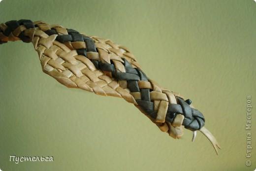 Говорят, к Новому году надо завести себе змейку - ужика, гадючку или кобру. фото 30