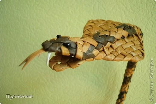 Говорят, к Новому году надо завести себе змейку - ужика, гадючку или кобру. фото 1