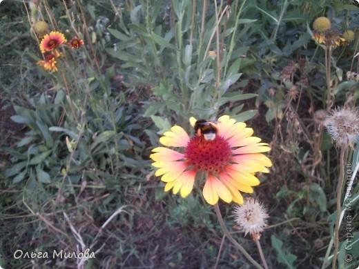 Цветы и не только... фото 29