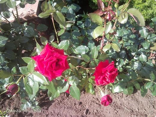 Цветы и не только... фото 24