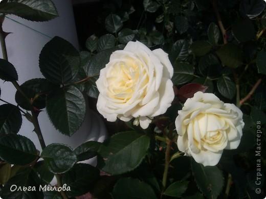 Цветы и не только... фото 25