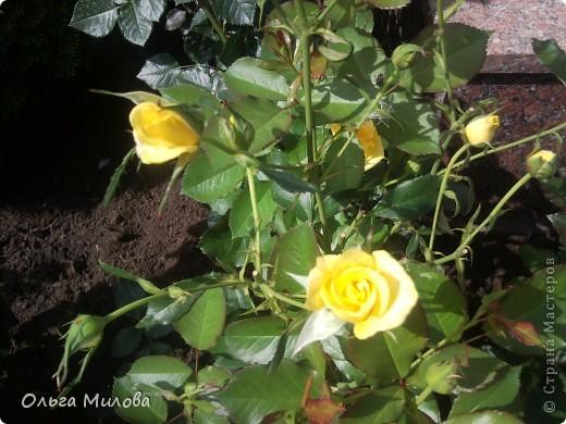 Цветы и не только... фото 27
