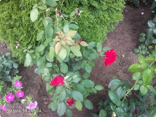 Цветы и не только... фото 28