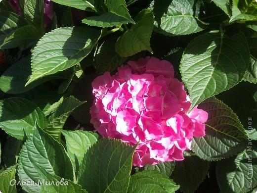 Цветы и не только... фото 26
