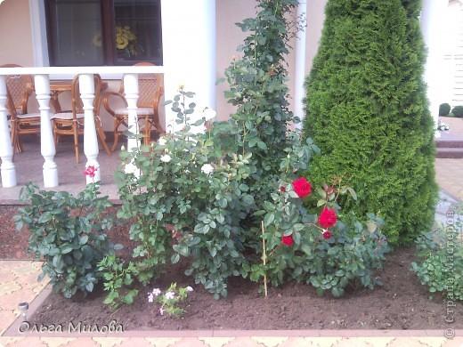 Цветы и не только... фото 30