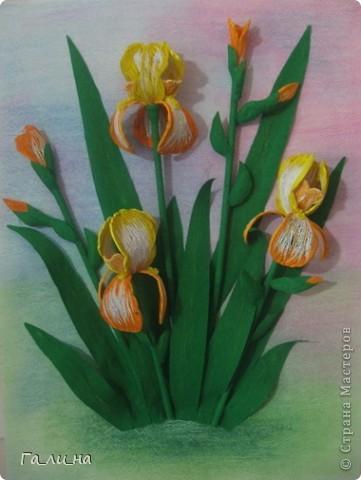 Картина панно рисунок Бумагопластика Квиллинг Ирисы Бумага гофрированная Бумажные полосы.