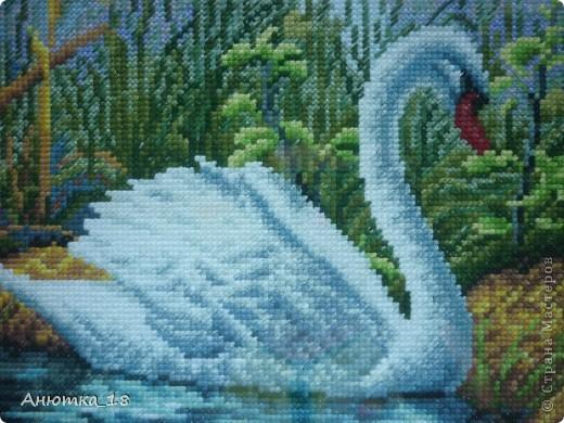 Вышивка крестом Лебедь