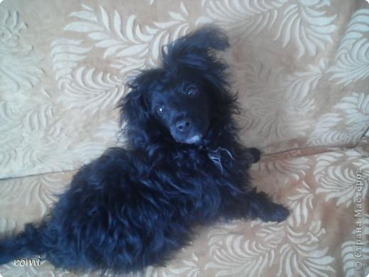 Вот таким малепусеньким щеночком Роми( полное имя Андромеда) попала в наш дом. фото 5