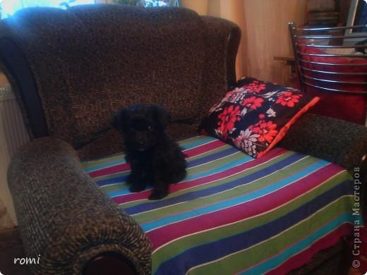 Вот таким малепусеньким щеночком Роми( полное имя Андромеда) попала в наш дом. фото 2