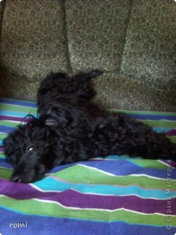 Вот таким малепусеньким щеночком Роми( полное имя Андромеда) попала в наш дом. фото 11