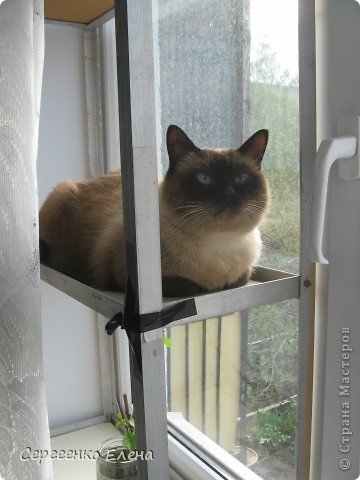 Дорогие жители Страны Мастеров! Это я. Уже знакомый вам котейка - Мурзавейка. Предлагаю вам посмотреть мой (уже пятый) фоторепортаж. На этот раз хочу рассказать как я провёл это лето на даче. фото 11