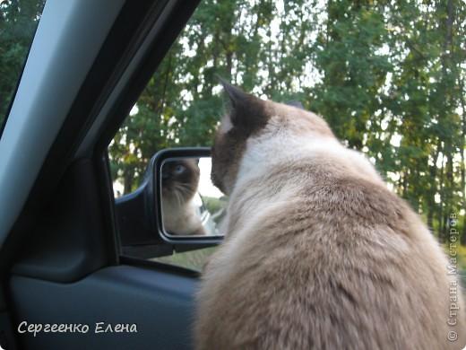 Дорогие жители Страны Мастеров! Это я. Уже знакомый вам котейка - Мурзавейка. Предлагаю вам посмотреть мой (уже пятый) фоторепортаж. На этот раз хочу рассказать как я провёл это лето на даче. фото 2