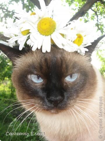 Дорогие жители Страны Мастеров! Это я. Уже знакомый вам котейка - Мурзавейка. Предлагаю вам посмотреть мой (уже пятый) фоторепортаж. На этот раз хочу рассказать как я провёл это лето на даче. фото 19