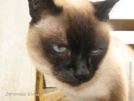 Дорогие жители Страны Мастеров! Это я. Уже знакомый вам котейка - Мурзавейка. Предлагаю вам посмотреть мой (уже пятый) фоторепортаж. На этот раз хочу рассказать как я провёл это лето на даче. фото 29