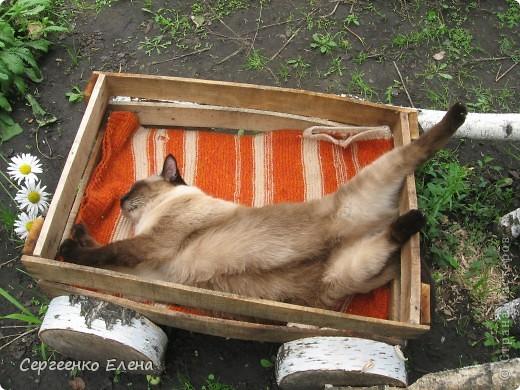 Дорогие жители Страны Мастеров! Это я. Уже знакомый вам котейка - Мурзавейка. Предлагаю вам посмотреть мой (уже пятый) фоторепортаж. На этот раз хочу рассказать как я провёл это лето на даче. фото 24