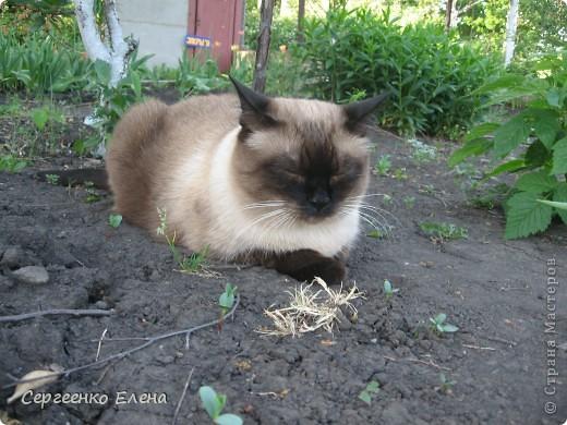 Дорогие жители Страны Мастеров! Это я. Уже знакомый вам котейка - Мурзавейка. Предлагаю вам посмотреть мой (уже пятый) фоторепортаж. На этот раз хочу рассказать как я провёл это лето на даче. фото 3