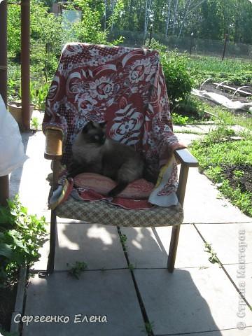 Дорогие жители Страны Мастеров! Это я. Уже знакомый вам котейка - Мурзавейка. Предлагаю вам посмотреть мой (уже пятый) фоторепортаж. На этот раз хочу рассказать как я провёл это лето на даче. фото 5