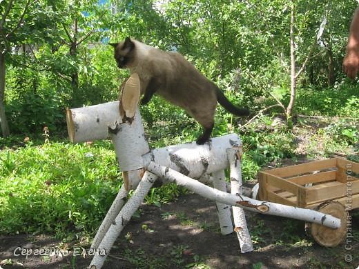 Дорогие жители Страны Мастеров! Это я. Уже знакомый вам котейка - Мурзавейка. Предлагаю вам посмотреть мой (уже пятый) фоторепортаж. На этот раз хочу рассказать как я провёл это лето на даче. фото 21