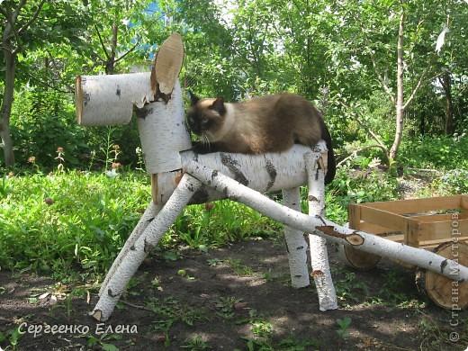 Дорогие жители Страны Мастеров! Это я. Уже знакомый вам котейка - Мурзавейка. Предлагаю вам посмотреть мой (уже пятый) фоторепортаж. На этот раз хочу рассказать как я провёл это лето на даче. фото 22