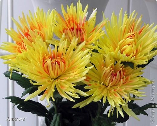 Мастер-класс Флористика Лепка Мини МК по лепке лепестков хризантемы Фарфор холодный фото 13