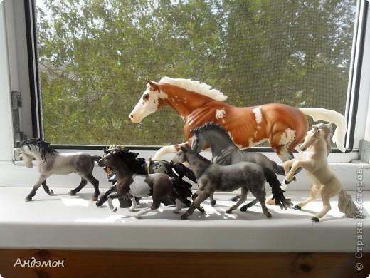 Вот три моих красавца жеребца на прогулке)) Коричневый: Исландский пони. Серый - Андалузкий жеребец) И белый: похож на Липизанскую лошадь. )) Не сказано было, так что утверждать не могу) фото 27
