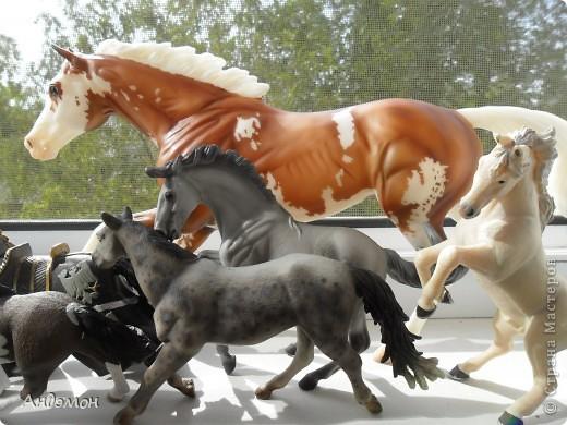Вот три моих красавца жеребца на прогулке)) Коричневый: Исландский пони. Серый - Андалузкий жеребец) И белый: похож на Липизанскую лошадь. )) Не сказано было, так что утверждать не могу) фото 29