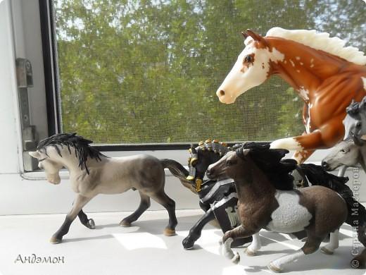 Вот три моих красавца жеребца на прогулке)) Коричневый: Исландский пони. Серый - Андалузкий жеребец) И белый: похож на Липизанскую лошадь. )) Не сказано было, так что утверждать не могу) фото 28